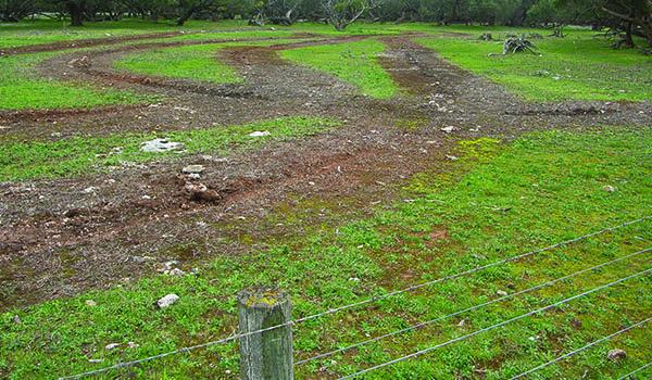bushland-restoration